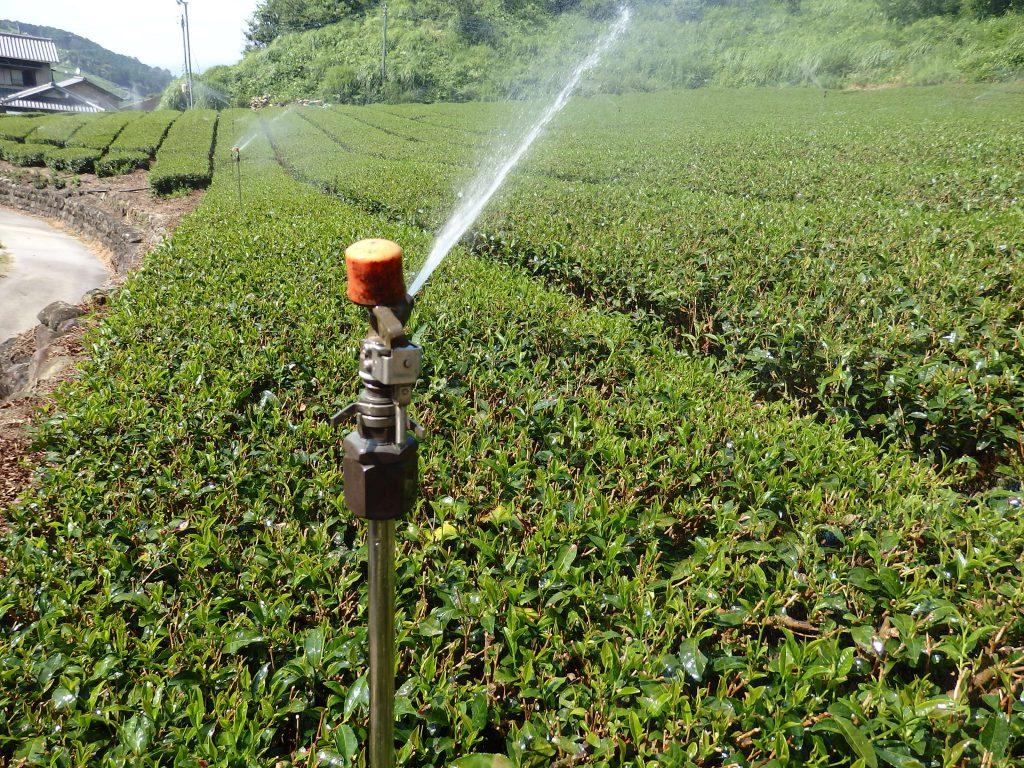 茶畑 潅水