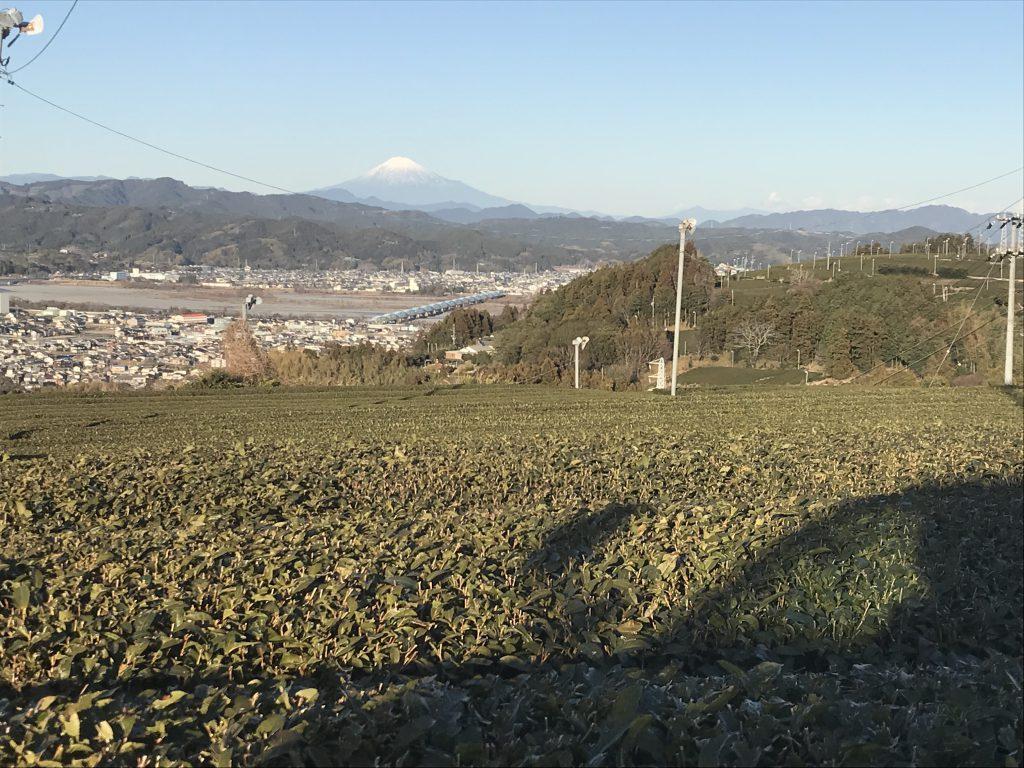 富士山と茶園
